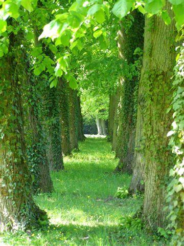 Gretz-Armainvilliers arboretum du Val des Dames
