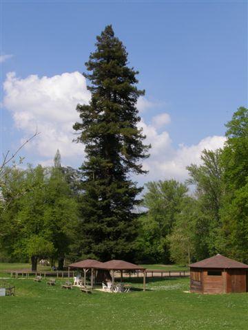 Bois-le-Roi base de loisirs arbre remarquable