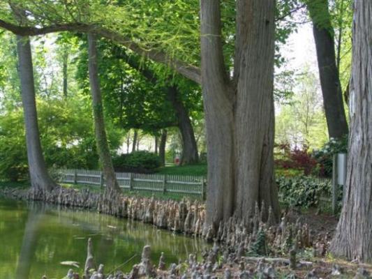 Varennes s/S la Sauvagerie arbre remarquable