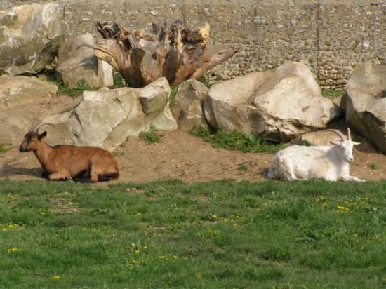 Dammarie-les-Lys parc Soubiran
