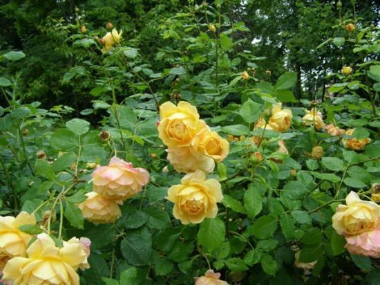 Brie-Comte-Robert les Bienfaites 10 juin