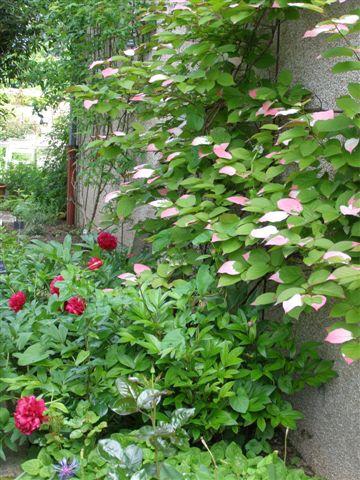 Ville-Saint-Jacques jardin de l'ancien presbytère