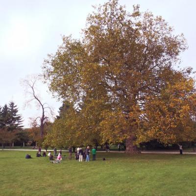 L'arbre en question